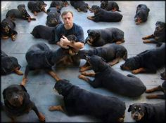 a lot of rotti's..adorable