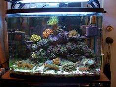 what my 30 gallon reef used to look like