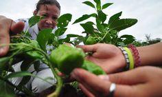 La FAO apoyará un sistema de monitoreo del mercado agrícola en Centroamérica
