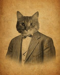 Cat in a Suit by Kevin Lucius.