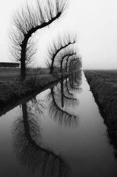 artblackwhite:Bending by SpreeuwTreesblack,canal,reflection,trees,water,white,winter