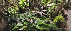 Orchidarium Update (part three) - Pumpkin Beth Indoor Ferns, Miniature Orchids, New Roots, Bottle Garden, Terrarium Plants, Planting Flowers, Flowering Plants, Plant Care, See Picture
