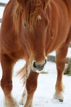 young horse in snow by Angela Sevin, via 500px