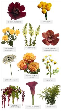 Dramatic Romance Bouquet Recipe 2019 An amazing vintage masterpiece of a bouquet at your fingertips! > w The post Dramatic Romance Bouquet Recipe 2019 appeared first on Flowers Decor. Vintage Wedding Flowers, Fall Wedding Flowers, Fall Flowers, Flower Bouquet Wedding, Floral Wedding, Bouquet Of Flowers, September Wedding Flowers, Long Flowers, Brown Flowers