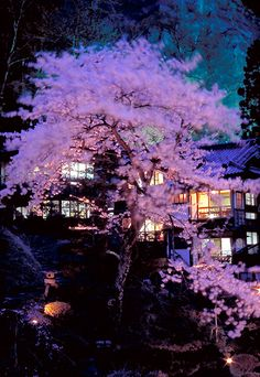 Cherry Trees, Mukaitaki Ryokan Inn, Fukushima, Japan 福島県会津若松市 東山温泉