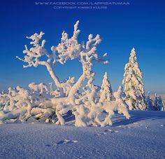 Finland: Lappi Satumaa - Lapland Wonderland