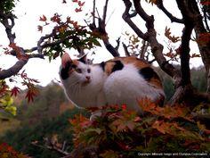 日本-1 | ネコギャラリー | デジタル岩合 動物写真家・岩合光昭氏 公認サイト