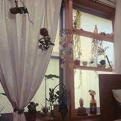 その他で、1Rのディアウォール/ディアウォール棚/アジアン雑貨/鉱石/植物のある暮らし/窓際ガーデン…などについてのインテリア実例を紹介。「デコ窓と言えるのか分からないけど…… 窓にディアウォールで棚を設置! 増えた植物や鉱石や小物を飾ってます。」(この写真は 2017-01-09 15:59:28 に共有されました)