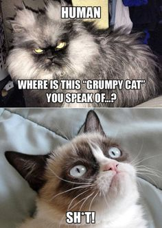 grumpy cat vs colonal meow (I think they both would appreciate being on this board)