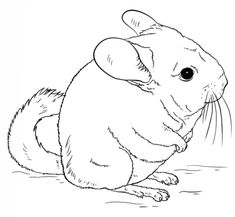 Cute long-tailed chinchilla coloring page from Chinchillas category. Select from 25445 printable crafts of cartoons, nature, animals, Bible and many more.