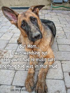 Always check the mud #german #shepherd