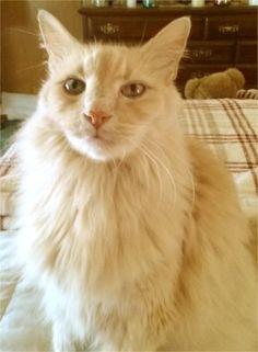 My cat Buddy Blazer. Lori, Finksburg, MD - 7/19/2015