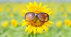 Itt van 13 érdekesség a D-vitaminról » Bokeh, Sun Poem, Summer Days, Summer Fun, Summer Poems, Healthy Morning Routine, Happy Life, Provence, Meditation