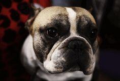 Breeding Immorality - http://www.laprogressive.com/dog-breeding-immorality/? utm_source=LA+Progressive