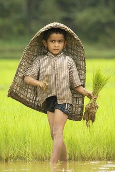 Child Rice Field Worker, India.