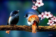 Bird Pair -Vogelpaar