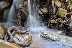 Sinuousness by Marco Colombo, Italy. Snakes can be difficult to find and even more difficult to photograph in an attractive setting.