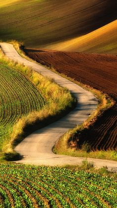 TAP AND GET FREE APP ⬆️ Green grass and road nature landscape wallpaper for iPhone 6 from Everpix app! Follow us and get Everpix free on the App Store!