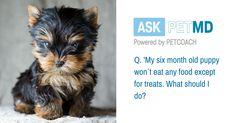 Is your dog getting used to treats instead of food? Here´s what you should do!  #AskPetMD   Have a question only a veterinarian can answer? Find your answer below: