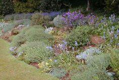 L 39 aubriete en pratique une plante vivace facile vivre des fleurs en cascade pour une for Comfaire un parterre de rocaille