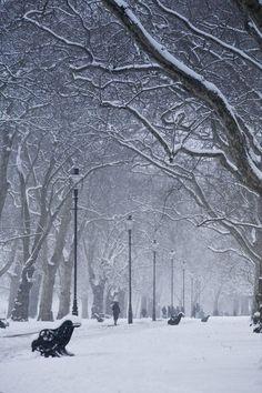 Hyde Park, London, England - Copyright: Neil Farrin/Jon Arnold Images