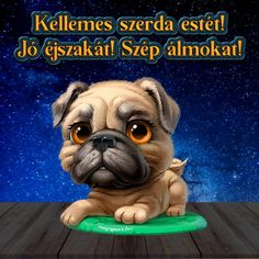 Share Pictures, Animated Gifs, Rakhi, Good Night, French Bulldog, Humor, Funny, Dogs, Poster
