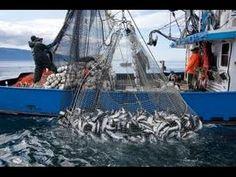 Alaska commercial fishing permits alaska commercial for Alaska fishing license