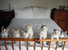 Little adorable kittens standing on a bed.. Click the pic for more awww