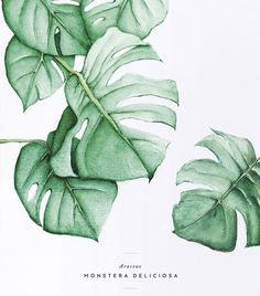I would like to do…Monstera Deliciosa Tropical Free & Gorgeous Tropical Leaf Prints Monster Illustration, Watercolor Illustration, Watercolor Logo, Watercolor Fashion, Portrait Illustration, Watercolor Flowers, Watercolor Paintings, Painting Flowers, Leaf Paintings
