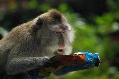 22. В шоке от состава продукта. (Фото Maigorzata Szypula | Comedy Wildlife Photography Awards)