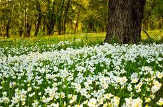 Flower Fields Free Stock Photo - Public Domain Pictures