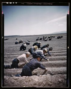 Japanese-American camp, war emergency evacuation, Tule Lake Relocation Center, Newell, California, 1942 or 1943.