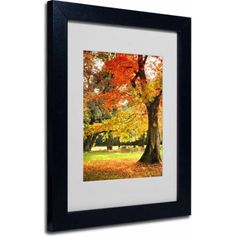 Trademark Fine Art Dance of Colors Canvas Art by Philippe Sainte-Laudy, Black Frame, Size: 11 x 14, Multicolor