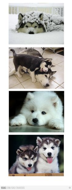 cute dogs to go with my cute husband and my cute kids in my cute future life