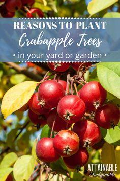407 Best The World of Trees images in 2019   Botany, Garden, Gardening