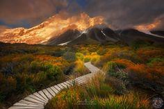 Sefton's Garden, Aoraki National Park, New Zealand