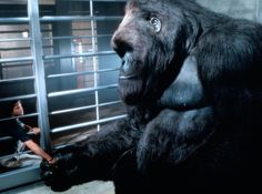 mighty joe young 1998 movie