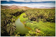 A real Oasis... Mulege, B.C.S. Mexico
