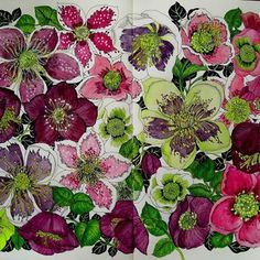 Hellebores from The Flower Year by I Leila Duly.#lyraaquacolors #thefloweryearcoloringbook #thefloweryear #leiladuly #adultcolouring #hellebore