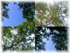 The sky of East Park in Kobe preparing for Kobe Festival is so clear,like talking to us 'Kobe Festival's coming~(*^。^*)'☆This is real pleasure of spring of Kobe♪