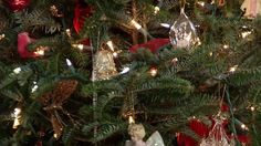 Finding the Perfect #Christmas #Tree
