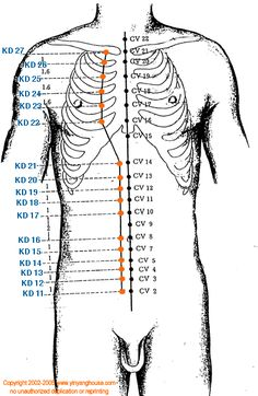 (KD) Kidney Meridian - Graphic | Yin Yang House