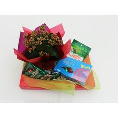 Kamo Florist - Kalenchoe Gift Pack