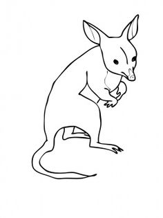 bandicoot from australia colouring page