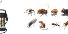 شركة رش مبيدات بحوطة بنىتميم شركة رش مبيدات بحوطة بنىتميم تتميز الحشرات بأنواعها المختلفة وكل نوع...