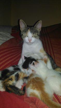 Mamma Sunday che nutre i suoi piccoli