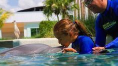 Aprende todo sobre los delfines con uno de los monitores de Miami Seaquarium.