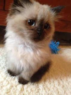 Tiny & fluffy - cuteness overload! Back to work Friday...^_^