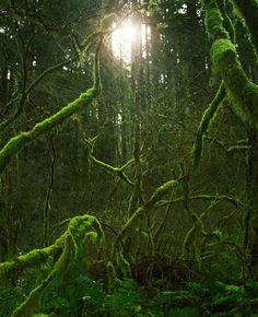 (by Zeb Andrews)       Source: Flickr / zebandrews   #Columbia River Gorge#Oregon#US