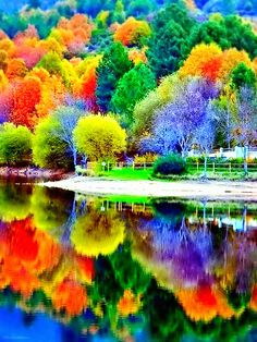 The several Color trees and Reflection.